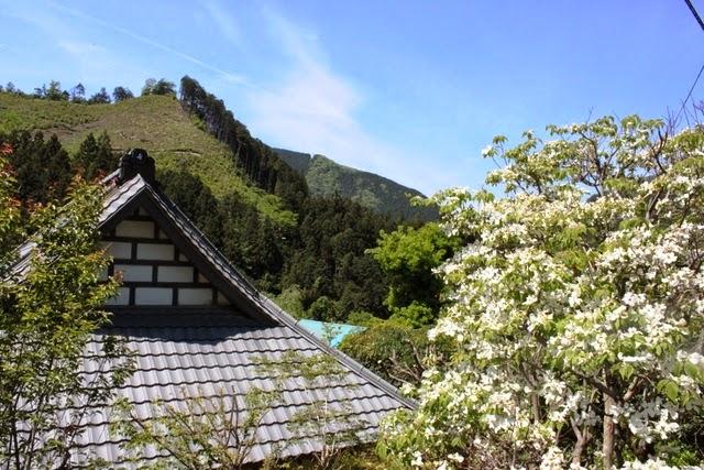 伝統家屋が多い