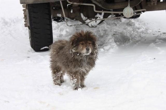 子犬がいた。たぶん軍に買われているのだろう。