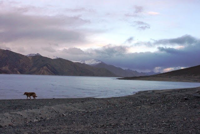 湖畔で犬が群れを成して歩いていた