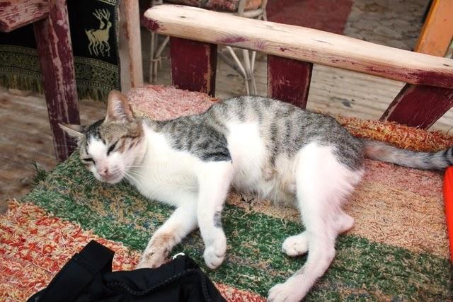 ダハブの人懐っこい猫