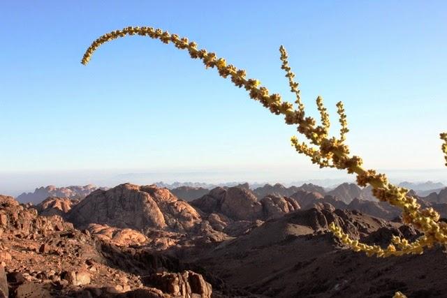 乾いた土地に生える巨大な植物