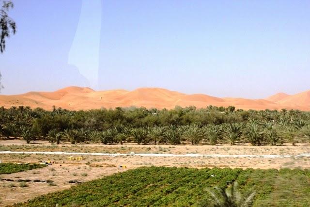 しばらくするとデーツの木のオアシスと砂丘が