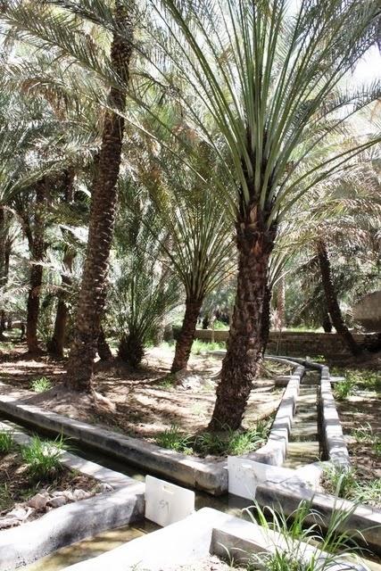 灌漑の水路