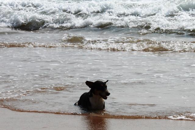 ワンコも海でゆったり