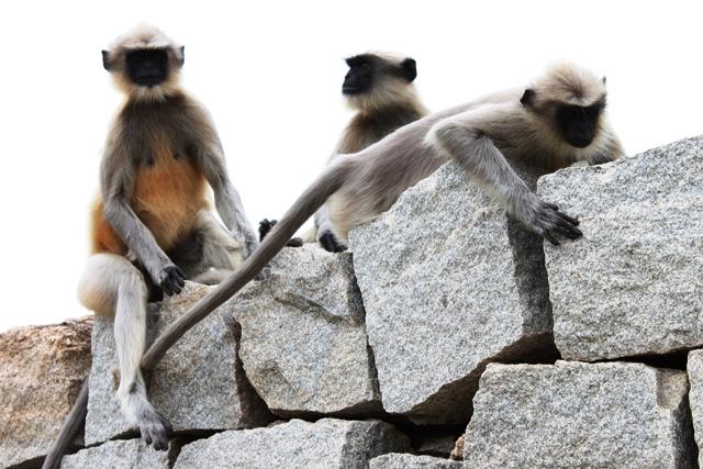 野生の猿多し