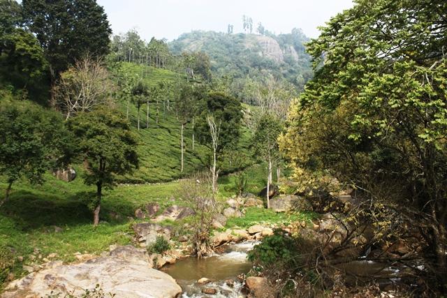 紅茶農園が見えてきました