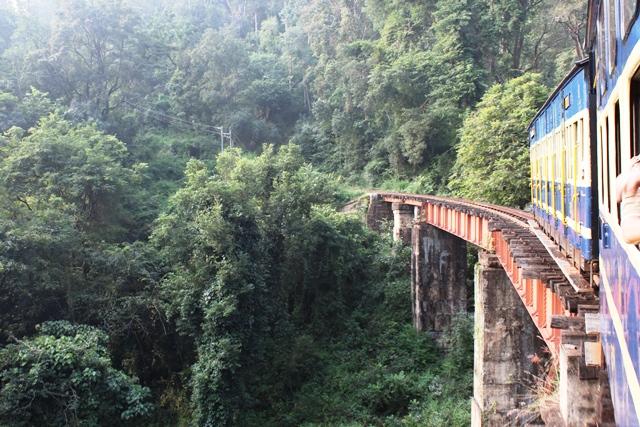 亜熱帯の森の中を走ります