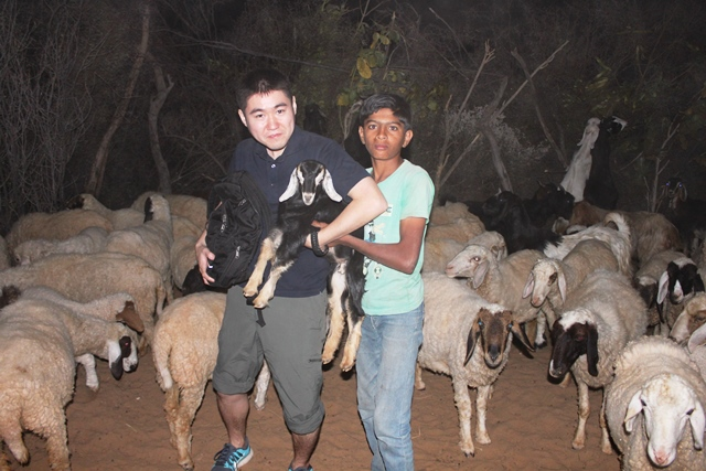 こんな砂漠の中なのに沢山いるヤギや羊たち