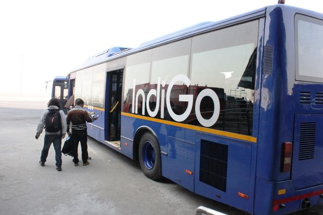 インディゴバス