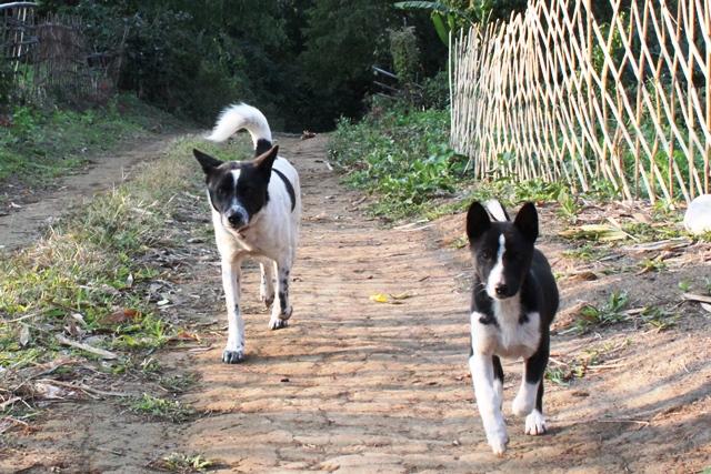 カメラに目がけて走ってくる犬達