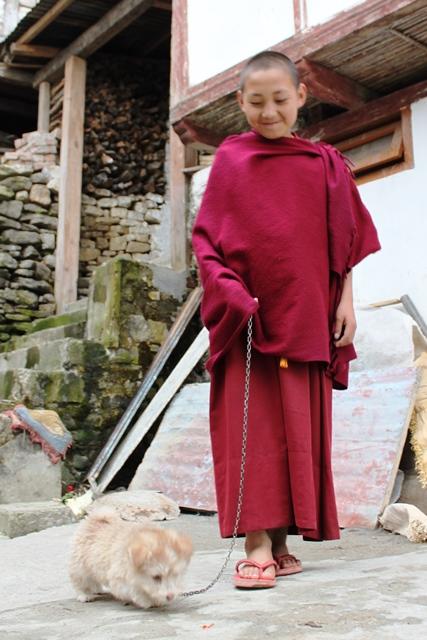 チベット風や