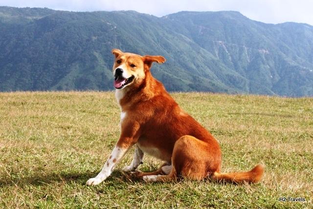 渓谷にいた野犬