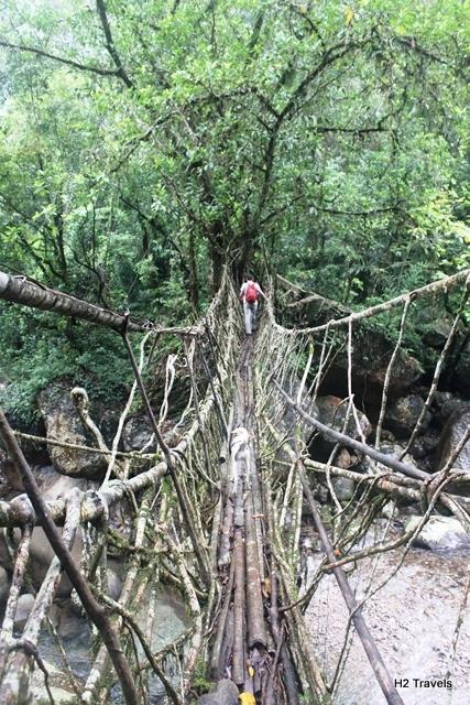 違う生きた木の橋