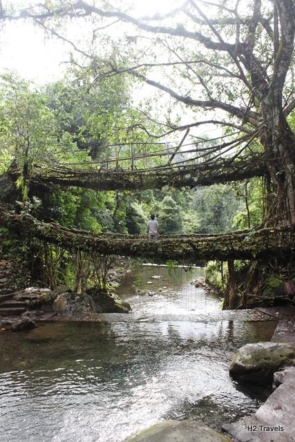 チェラプンジ 生きた橋:生きた木の橋!