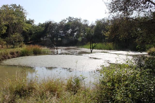 リゾート敷地内の池