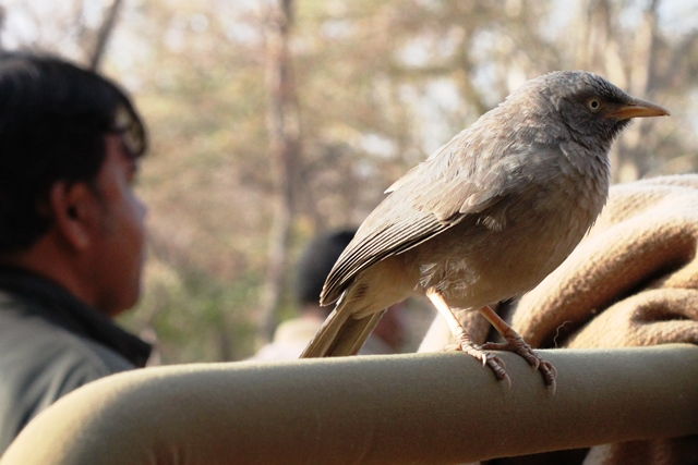 人間に慣れている野生の鳥