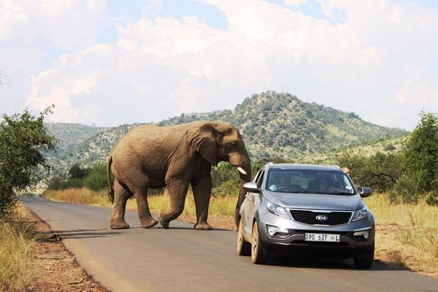 またまた野生の象