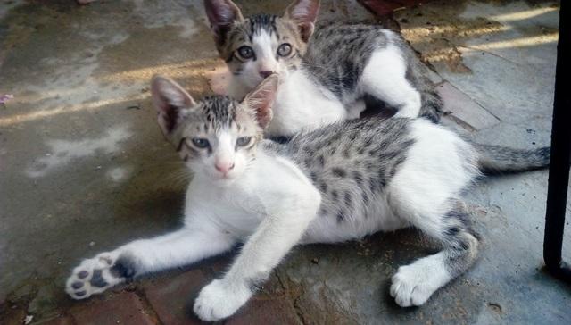 育ち盛りの子猫たち