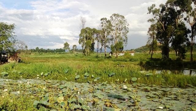 ロクタク湖の沼地