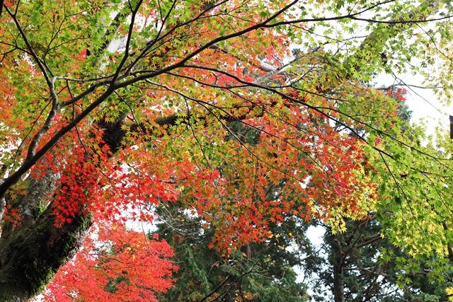 一本の木でこれだけ色が違う