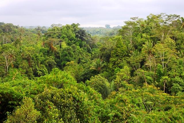 入口は広大なジャングル